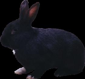 black rabbit PNG