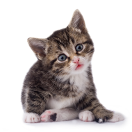 Black & White Cat PNG PNG