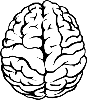Brain Outline PNG