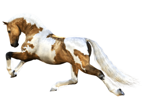 brown and white horse PNG
