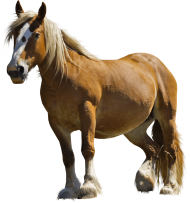 Brown fat horse PNG