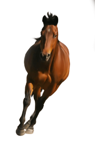 Brown Horse PNG