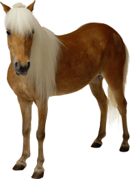 Brown horse with long hair PNG