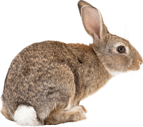 brown rabbit sideview PNG