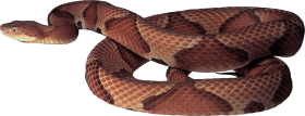 Brown Snake PNG