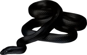 Brown Snake Lying On The Ground PNG
