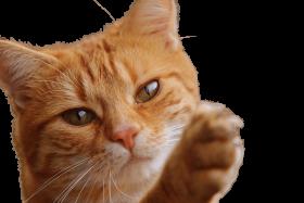 Cat Close Up PNG PNG