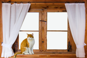 Cat on the window PNG
