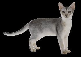 Cat Transparent PNG PNG
