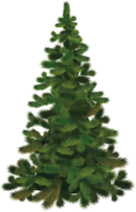 Christmas Tree Fir PNG