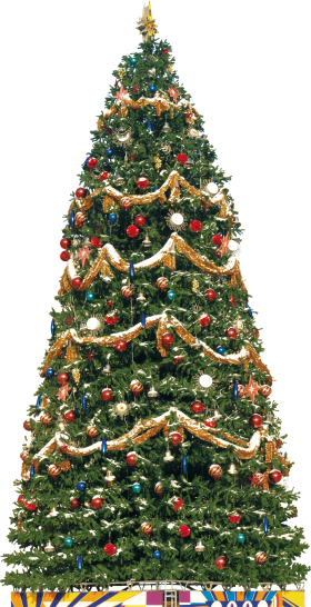 Big Traditional Christmas Tree PNG