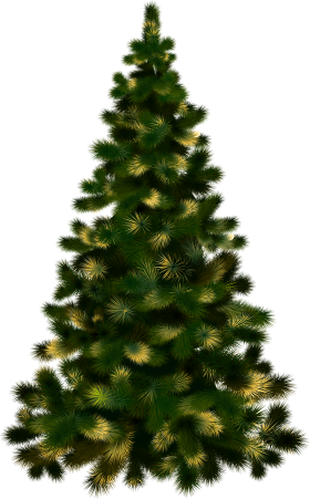 Christmas Tree without Lights PNG