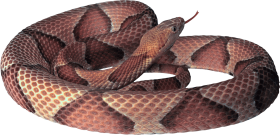 Curling Snake PNG
