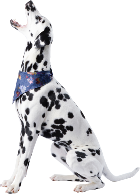 Cute Dalmatian Sitting PNG