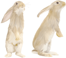 cute Gray rabbit standing on his feet PNG