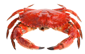 Cute Red Crab PNG