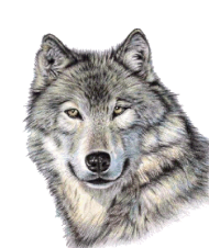 Cute Wolf Face PNG