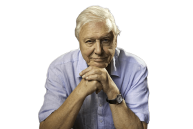 David Attenborough Sitting PNG