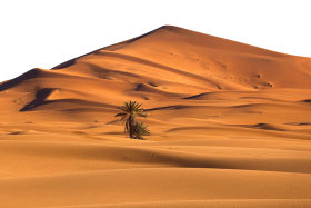 Desert with Desert Palm PNG