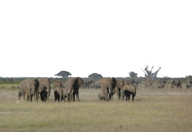A Herd of Elephants PNG