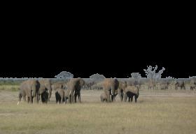 A Herd of Elephants PNG