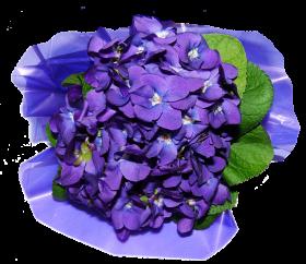Flower petals PNG