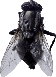 Fly PNG