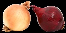Fresh Onions PNG