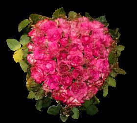 Fresh Roses PNG
