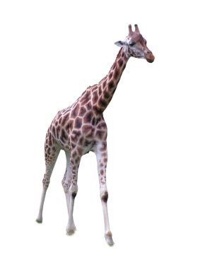 Carved Girraffe PNG
