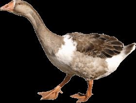 goose PNG