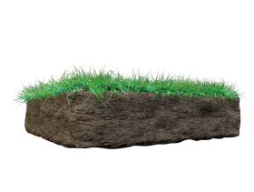 Grass on Mud PNG