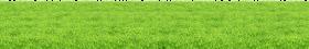 Grass Surface PNG