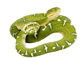 Green Snake twirling PNG