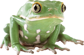 green toad PNG
