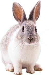 grey rabbit PNG