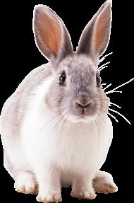 grey rabbit PNG