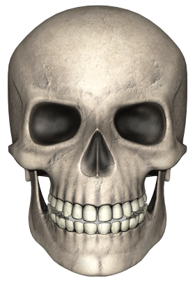 Head Skull PNG