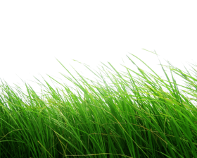High Grass PNG