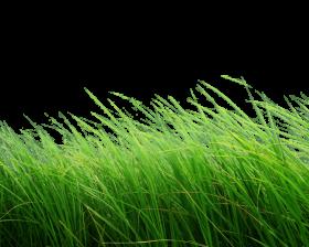High Grass PNG