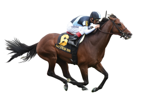 Horse Jockey PNG