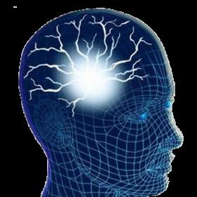 Human Brain PNG