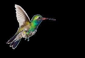 hummingbird clipart PNG