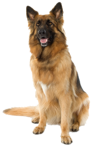 Large sitting Dog PNG