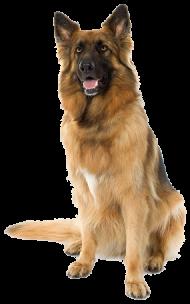 Large sitting Dog PNG