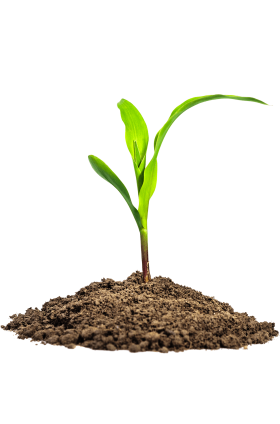 Leaves in Dirt PNG