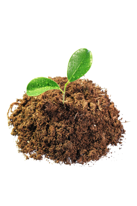 Leaves in Mud PNG