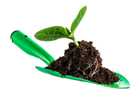 leaves in soil PNG