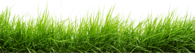 Line Of Grass PNG