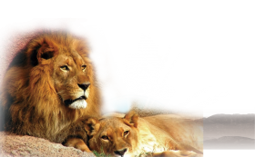 Lion and Cub PNG